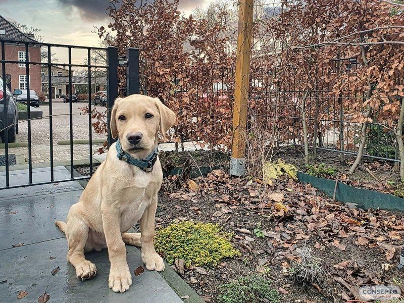 Consepto Hekwerk-Spijlenpoort hond spijlenhekwerk tuin